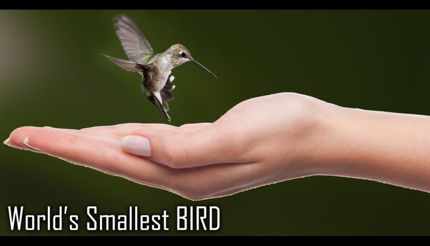 Top 10 Smallest Cutest Beautiful Birds In The World