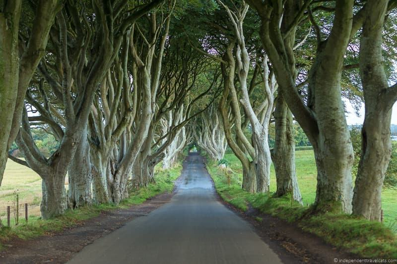 2. The Dark Hedges – Northern Ireland